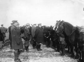 [Inspection of the horse transport of a Canadian battalion at the Western Front]