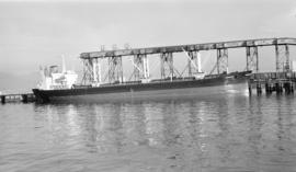 M.S. Constance [at dock]