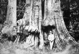 Norman Caple foot of tall timbers in Stanley Park