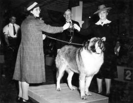 Trophy presentation at exhibition all-breed dog show [St. Bernard]