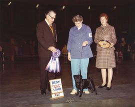 Best Canadian Bred Puppy in Show award [Pug] being presented at 1974 P.N.E. All-Breed Dog Show