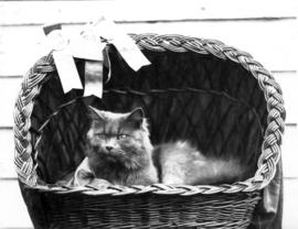 Cat in basket with ribbons