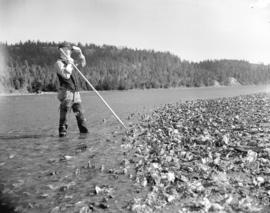 Man with oyster rake in oyster bed