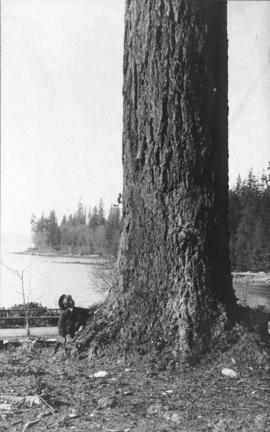 [Young boy watching a squirrel climb a tree at Stanley Park]