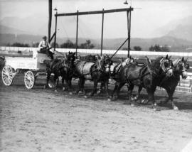 Six-horse draft team pulling Albany Creamery wagon on Hastings Park racetrack