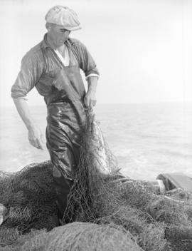 "Fisherman with fish ""gilled"" in seine net"