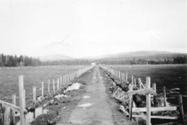 [View of dyked lands on Cape Scott]