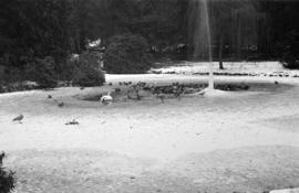 Frozen fountain [in duck pond]
