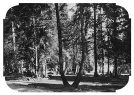 [Picnic area in trees]