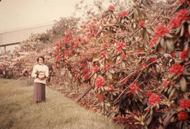 Jo Livingstone [in garden with rhododendrons]