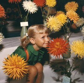 Young girl sitting in display of dahlias on P.N.E. grounds