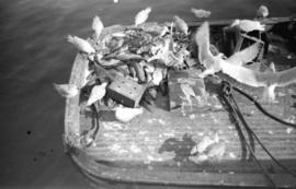 Seagulls eating fish on boat