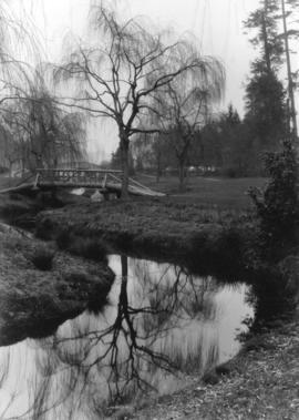 [Willows and bridges in Stanley Park]