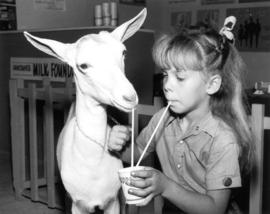 Girl with goat at milk exhibit