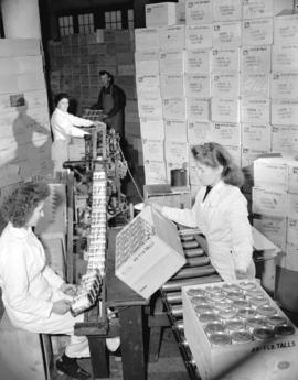 [Cans of salmon being labelled and boxed at a salmon cannery]