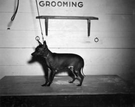 Small dog on grooming table