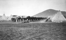 [Tethered horses in military camp]