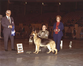 Best in Group [Working Group: German Shepherd] award being presented at 1974 P.N.E. All-Breed Dog...
