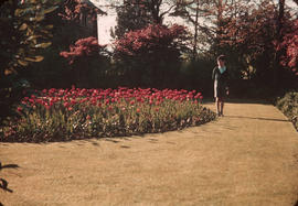 Boy standing beside tulip garden