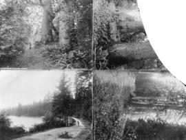 [Four views of trails and trees in Stanley Park]