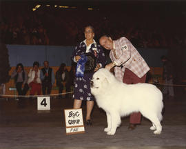 Best in Group [Working Group: Great Pyrenees] award being presented at 1975 P.N.E. All-Breed Dog ...