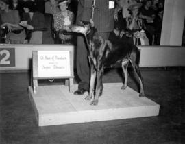 Champion Beda of Plantation, owned by Jasper Daniels
