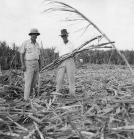 Coz and F. [Frank] Low [in sugarcane field]
