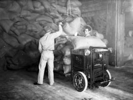 Last cargo of raw sugar: men hoisting bags of raw sugar