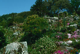 Gardens - United Kingdom : Tresco Abbey