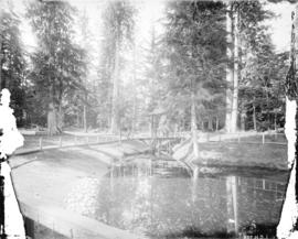 [Beaver pond in Stanley Park]