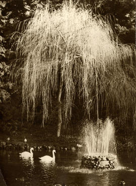 Stanley Park Duck Pond, with swans and fountain