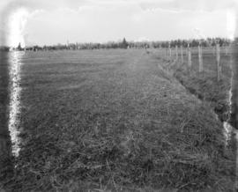 [Shannon's Farm, Granville Street and 57th Avenue]