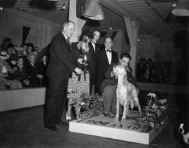 Best dog award presentation for English Setter at exhibition all-breed dog show