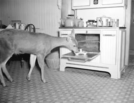 Deer in Malahat Lookout Kitchen