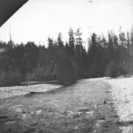[Capilano Creek, showing trees growing along bank]