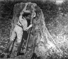 [Stanley Hynes of the 1st Vancouver Troop, Baden-Powell Boy Scouts climbs a stump]