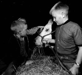 Children with cattle
