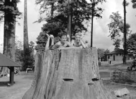 Two boys atop large stump