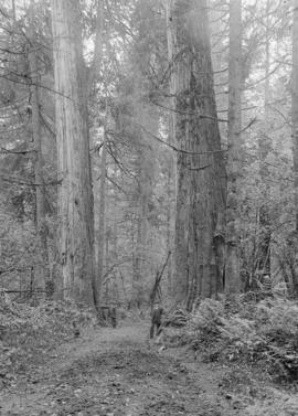 Men standing next to large trees in the forest