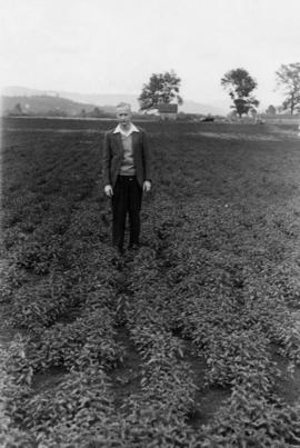 Beet seed operations: man standing in field of immature sugar beet plants