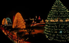 Gardens - United States : Christmas Tree Lane, Longwood Gardens