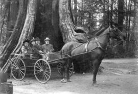 [Mr. Stewart and others in a buggy in front of the Hollow Tree]