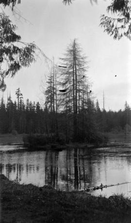 [Island in lake, Stanley Park]