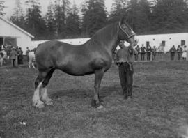 [Horse at an exhibition]