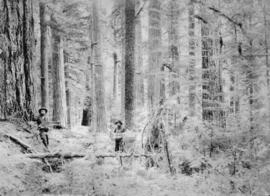 [Two loggers among trees in the forest]
