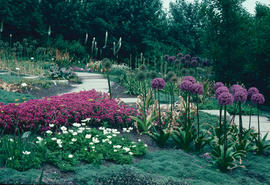Garden exhibitions and flower shows : summer bulb display, Floriade