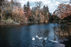 Gardens - United Kingdom - Royal Botanical Garden - Kew : lake in autumn, fringed with trees of a...
