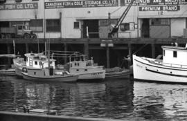 Fish boats at [Nation Harbours' Board dock]