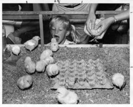 Storybook Farm 1966 : [girl looking at chicks]