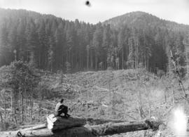 [View of Clear Cut, Youbou B.C.]